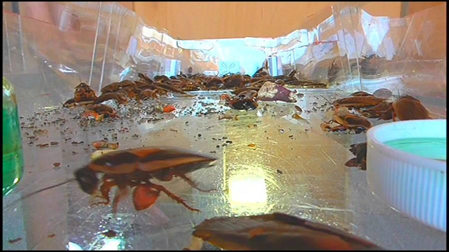 25cmパンプスの瑠伊様が巨大ゴキブリの大群をグチャグチャと踏み潰す!!-中編- サンプル画像02
