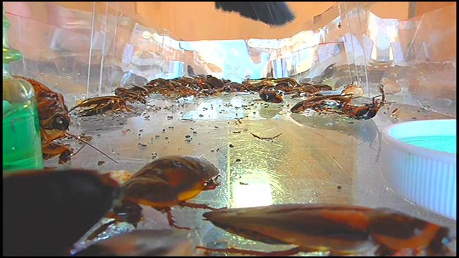 25cmパンプスの瑠伊様が巨大ゴキブリの大群をグチャグチャと踏み潰す!!-中編- サンプル画像03