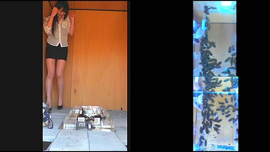 25cmパンプスの瑠伊様が巨大ゴキブリの大群をグチャグチャと踏み潰す!!-中編- サンプル画像07