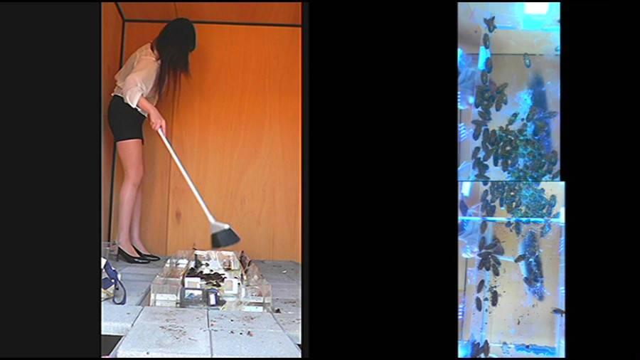 25cmパンプスの瑠伊様が巨大ゴキブリの大群をグチャグチャと踏み潰す!!-中編- サンプル画像08