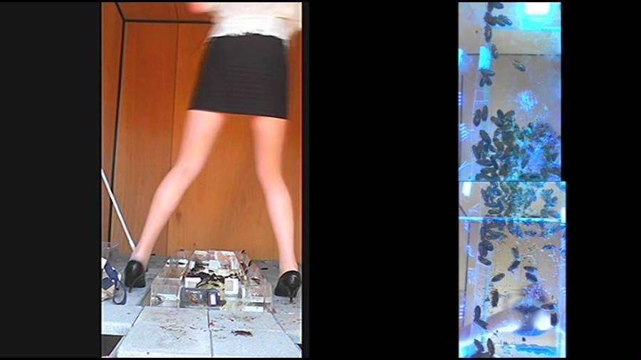 25cmパンプスの瑠伊様が巨大ゴキブリの大群をグチャグチャと踏み潰す!!-中編- サンプル画像09