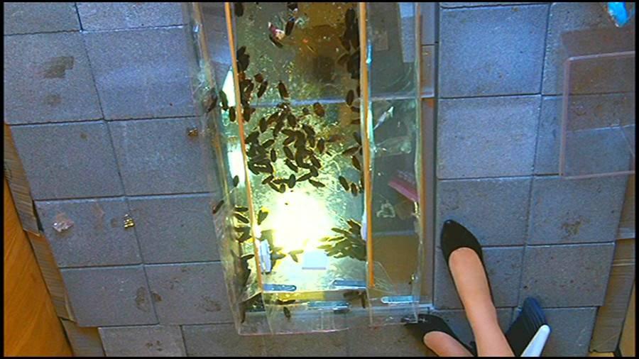 25cmパンプスの瑠伊様が巨大ゴキブリの大群をグチャグチャと踏み潰す!!-中編- サンプル画像12