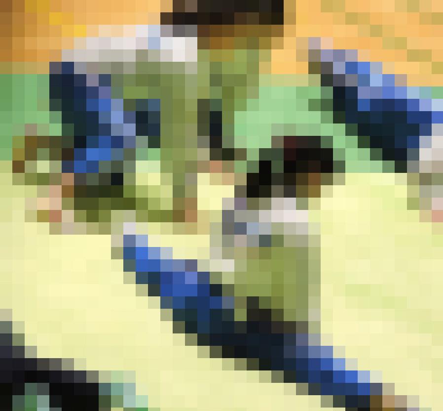 体操JK 体操競技選手権大会【動画】スポーツ編 3601~3603と3605~3607セット販売 サンプル画像2