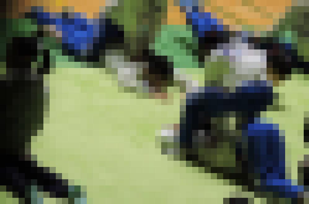体操JK 体操競技選手権大会【動画】スポーツ編 3601~3603と3605~3607セット販売 サンプル画像3